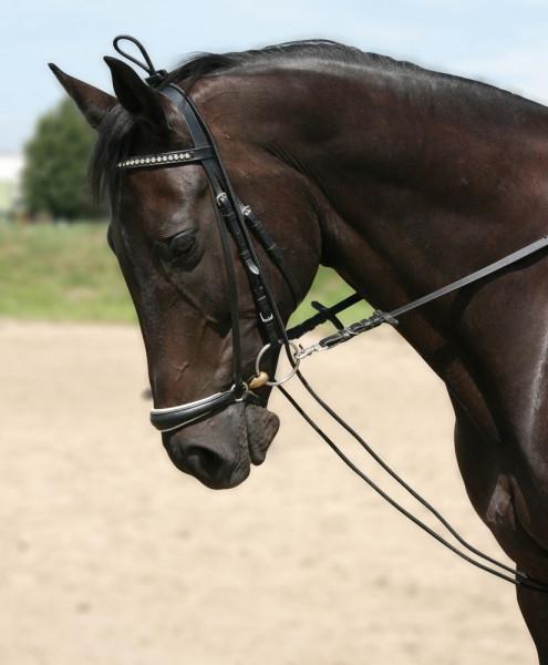 Paard > Hoofdstellen > Hoofdstel accessoires
