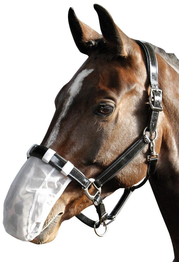 Paard > Gezondheid > Luchtwegen