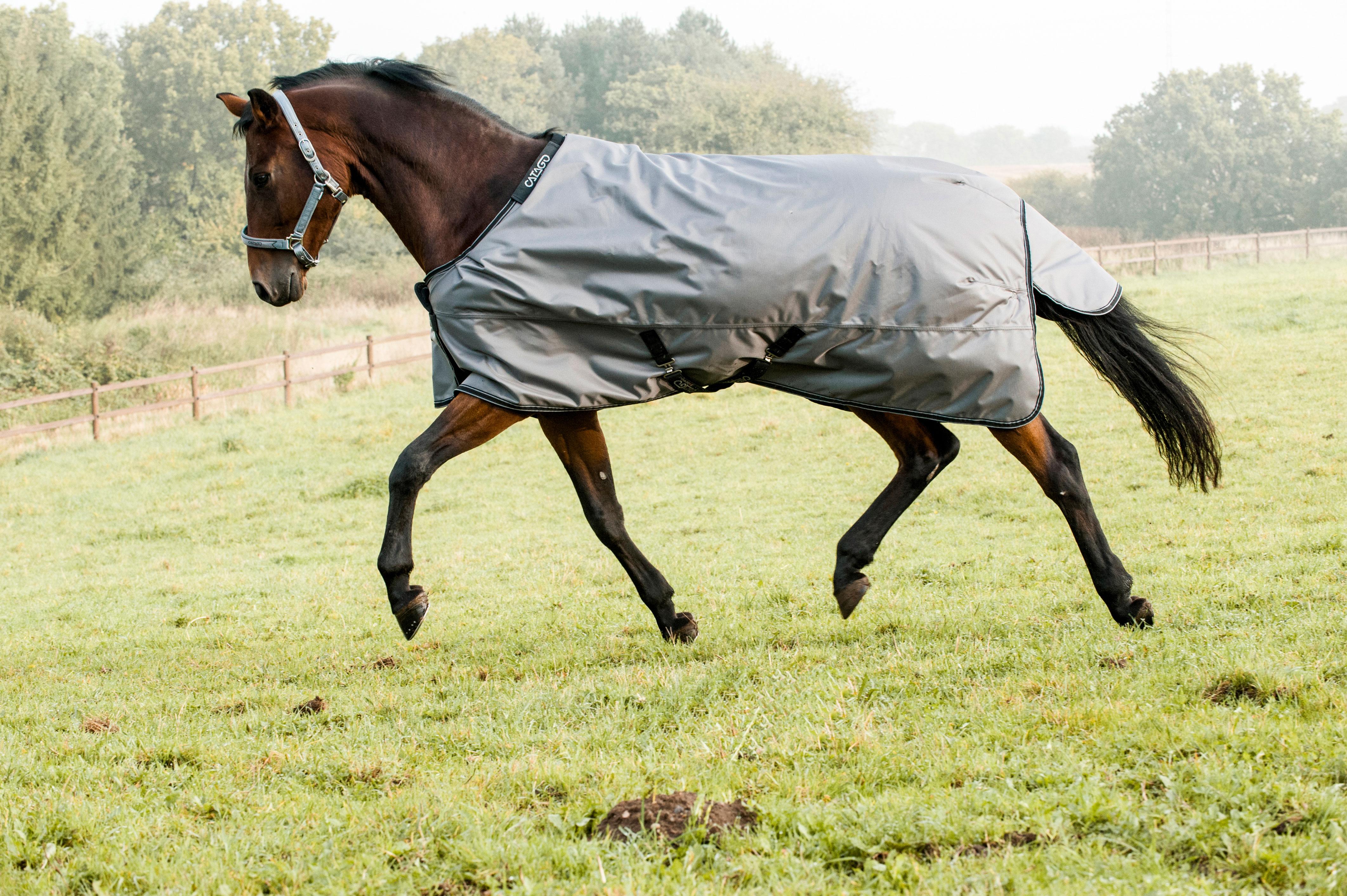 Paard > Paardendekens > Winterdekens
