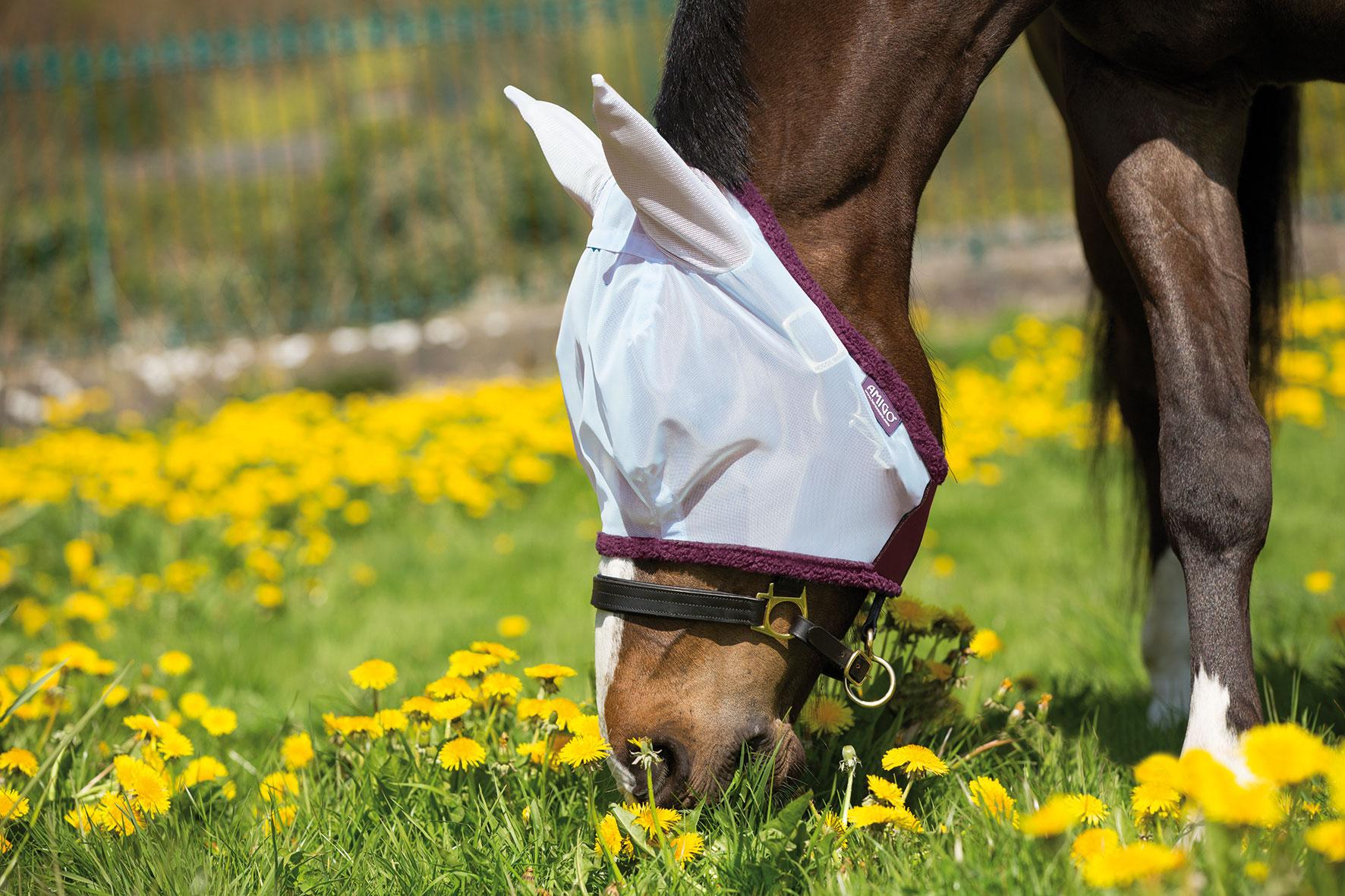 Paard > Horseware