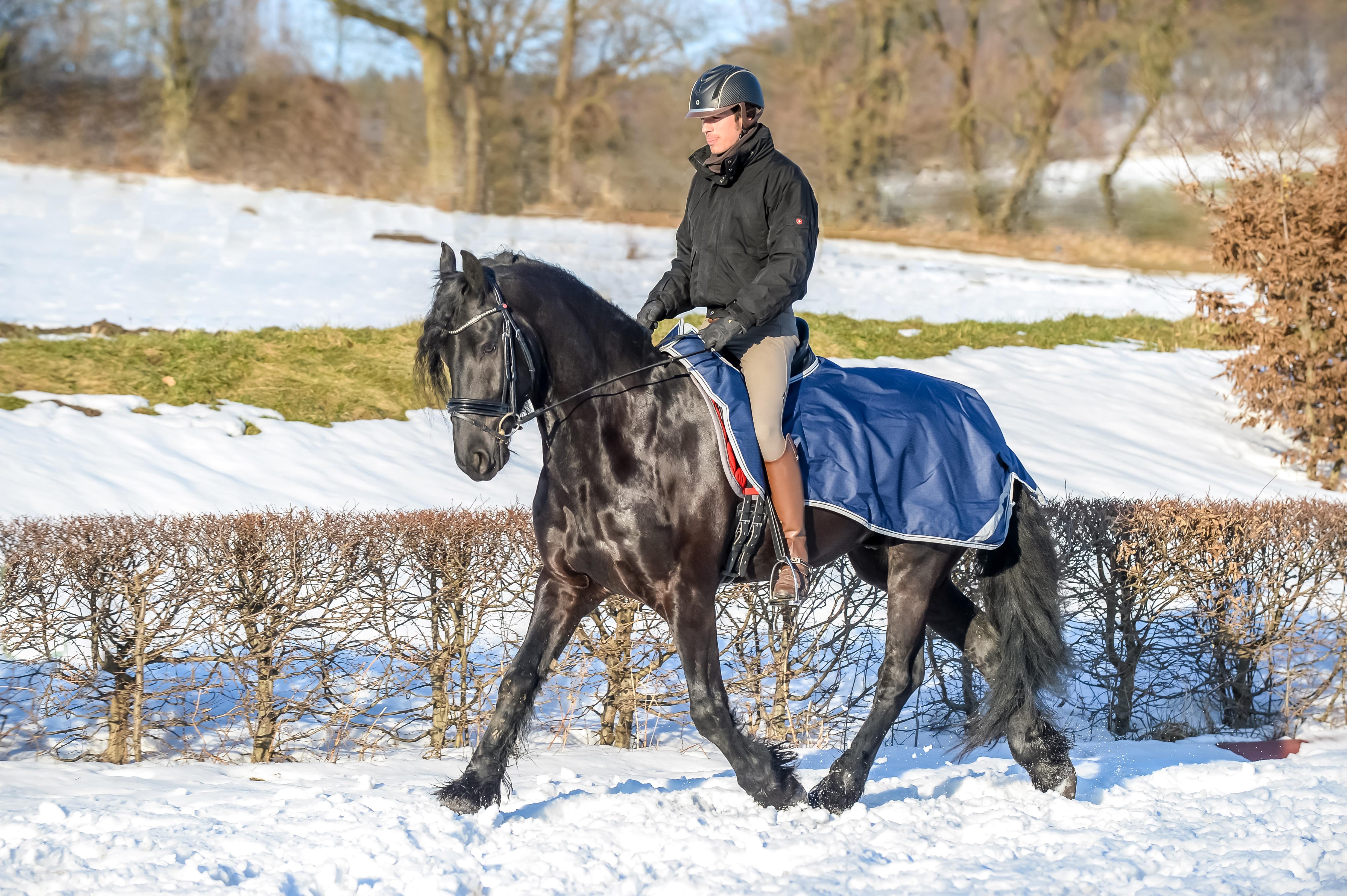 Paard > Bucas Dekens