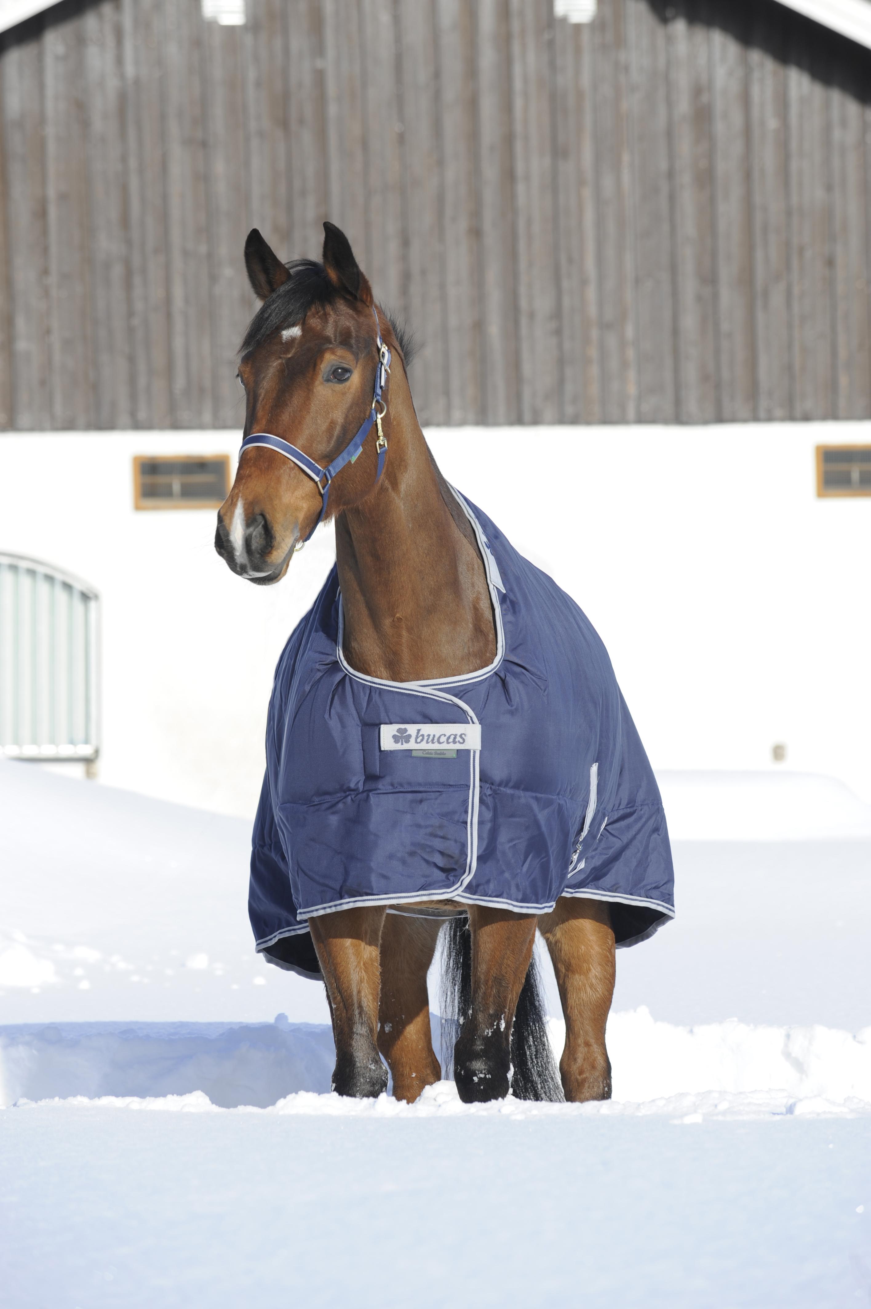 Paard > Bucas Dekens > Bucas Celtic Staldekens