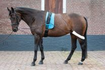 Harry's Horse Longeerhulpteugel