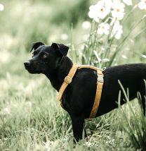 Kentucky Honden Harnas Loop Velvet