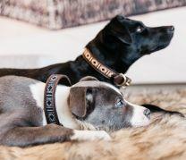 Kentucky Hondenhalsband Handgemaakte Parels