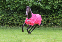 Bucas Freedom Turnout Light Pony Paradise Pink
