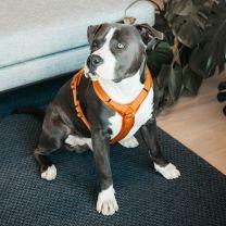Kentucky Honden Harnas Active Velvet