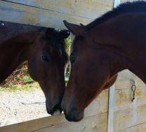 Onbreekbare Spiegel voor paarden