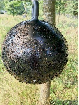 Horse Fly Trap Bal 45cm