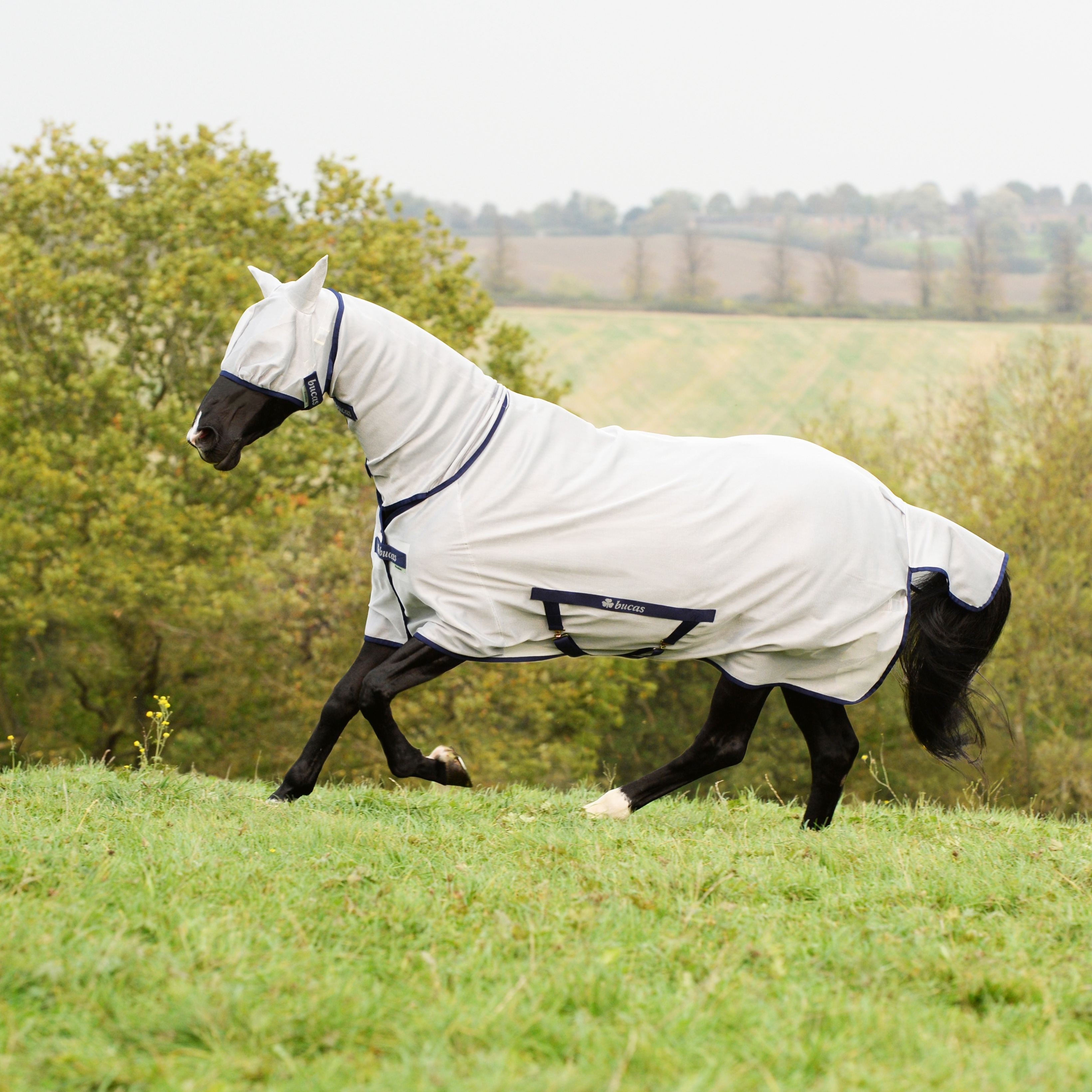 Paard > Bucas Dekens > Bucas Freedom Serie