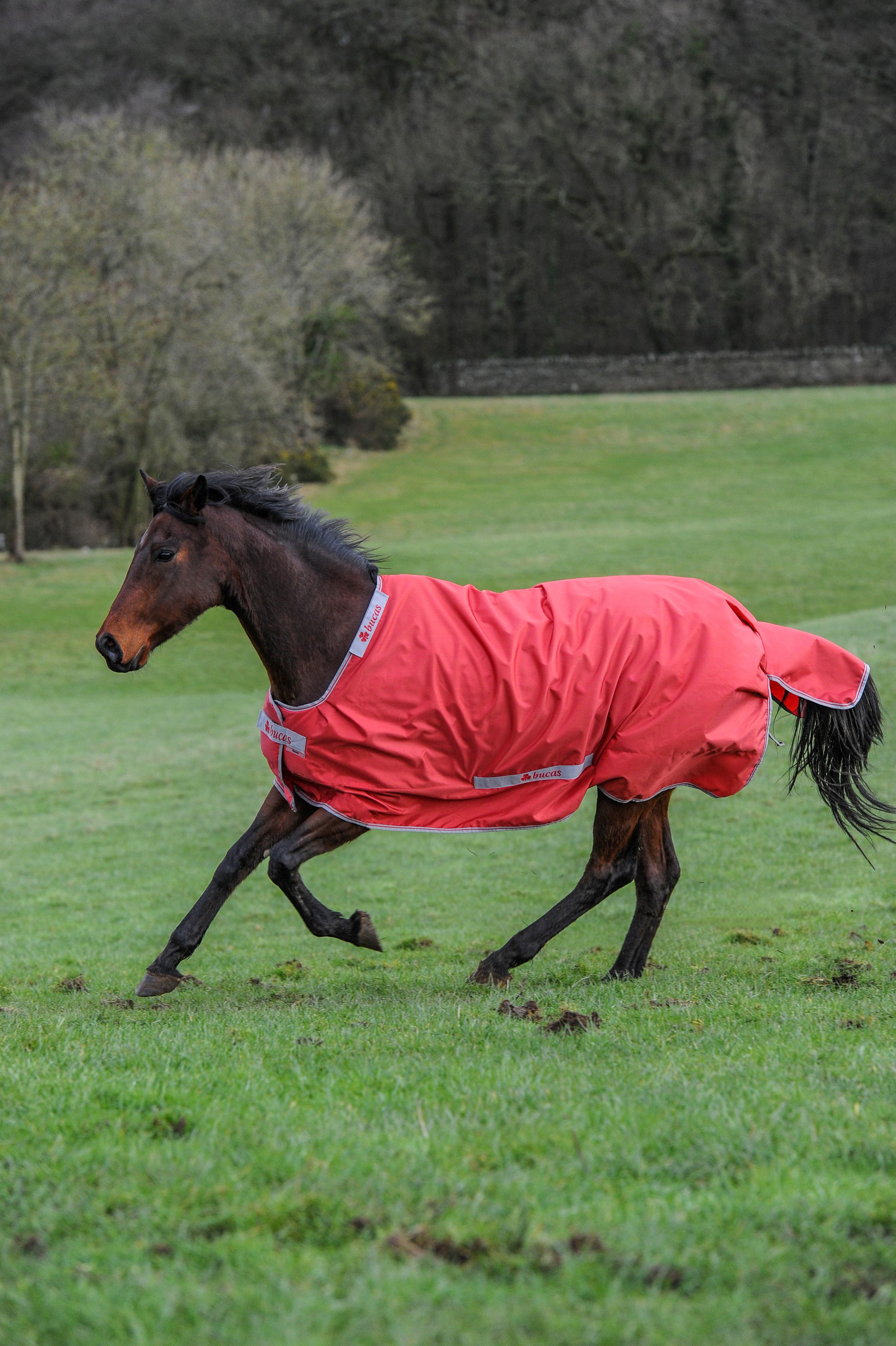 Paard > Bucas Dekens > Bucas Smartex Turnout